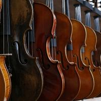 Bild Violinen